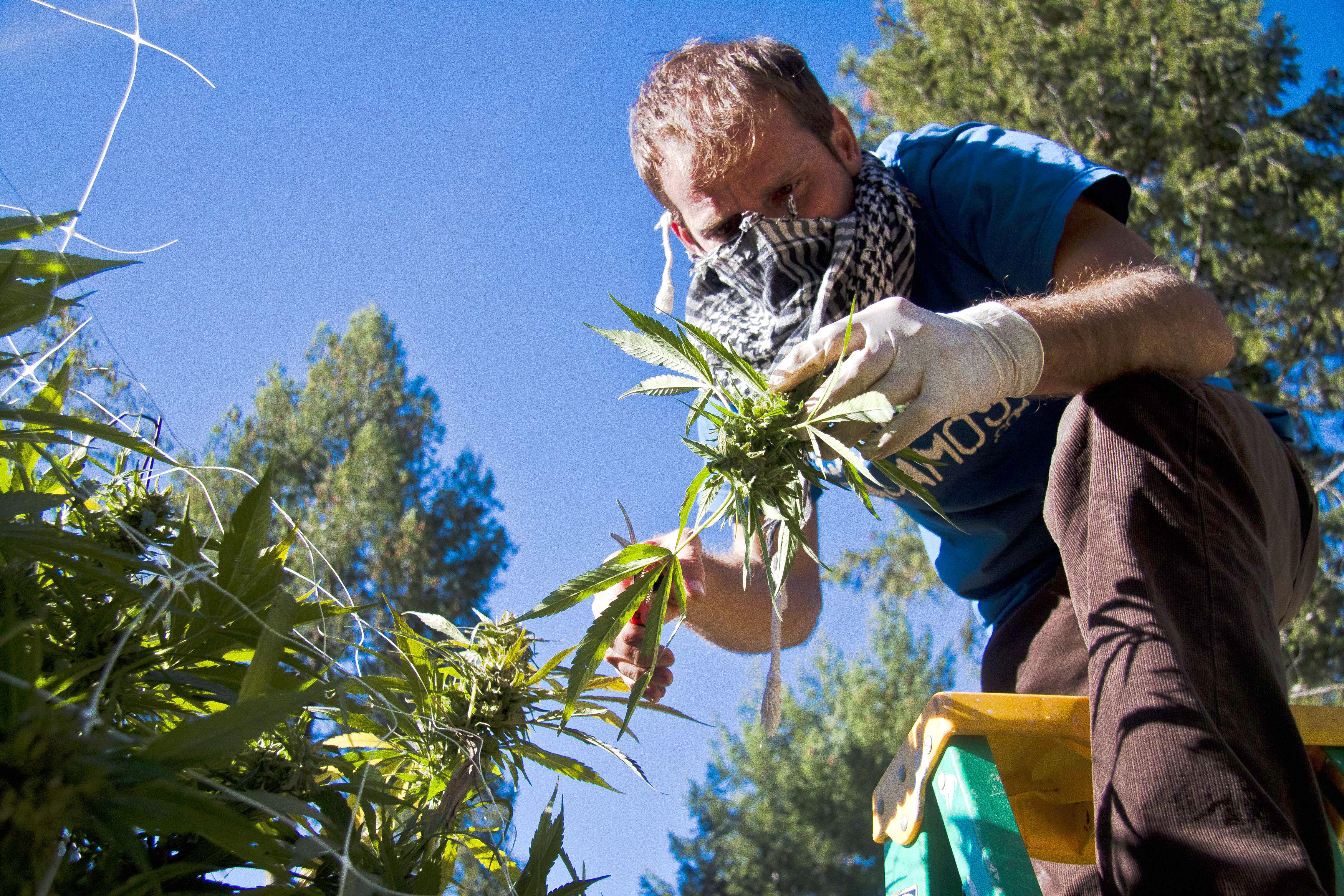 Feds Announce New Idea Regulations >> Inside Dea Ban On Marijuana Extracts Rolling Stone