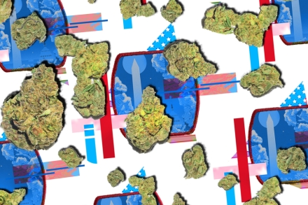 The Rolling Stone Guide to Legal Pot: Washington, D C