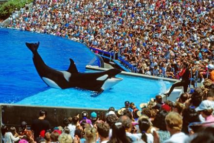 Pink, SeaWorld Battle Over Killer Whale Captivity – Rolling