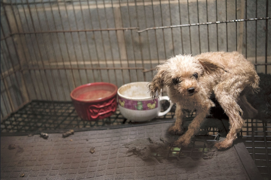 The Dog Factory: Inside the Sickening World of Puppy Mills