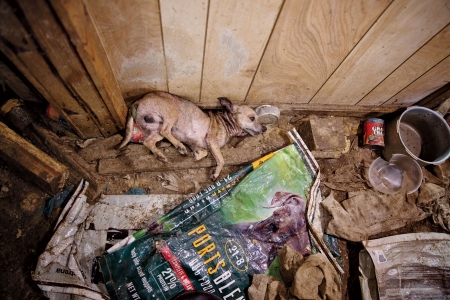 An investigation into the underworld of America's overcrowded dog farms, the secret shame of the pet industry.