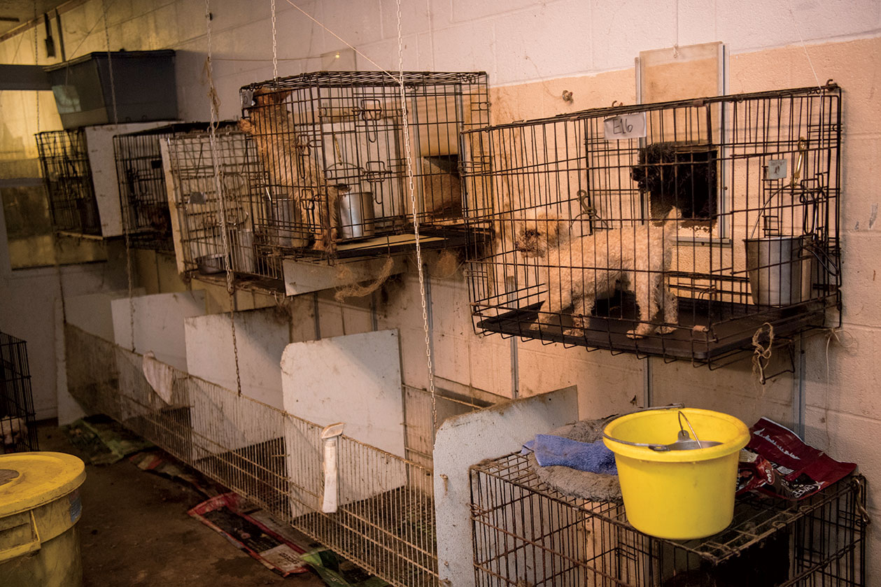 Dogs were found in small cages during the raid on Patricia Yates' puppy mill in Cabarrus County, North Carolina.