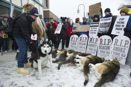 Inside PETA's Fight to Take Down the Iditarod – Rolling Stone