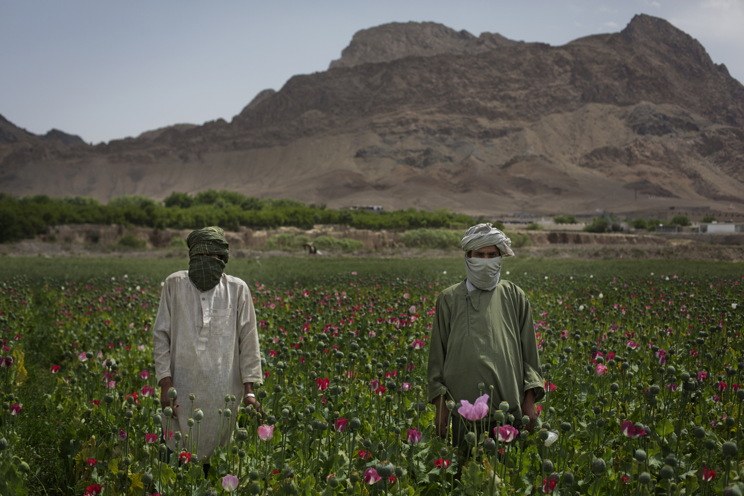 Afghanistan: The Making of a Narco State