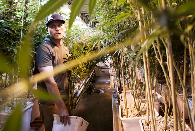 Too High To Fail: Inside Denver's Weed Boom