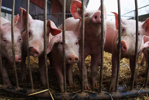 Boss Hog: The Dark Side of America's Top Pork Producer