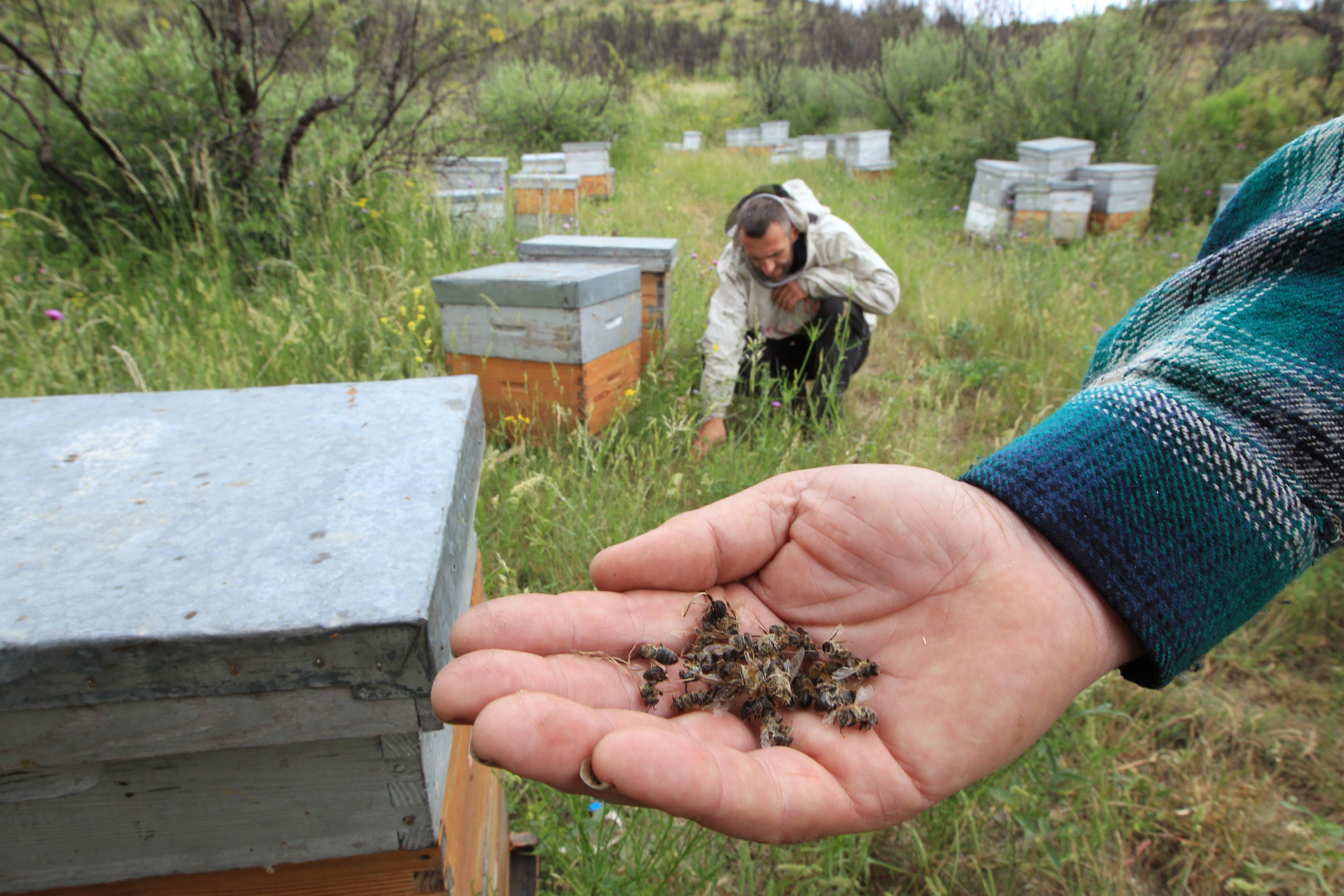 Pesticides Killing Bees: Study Shows What 'Everybody's Suspected'