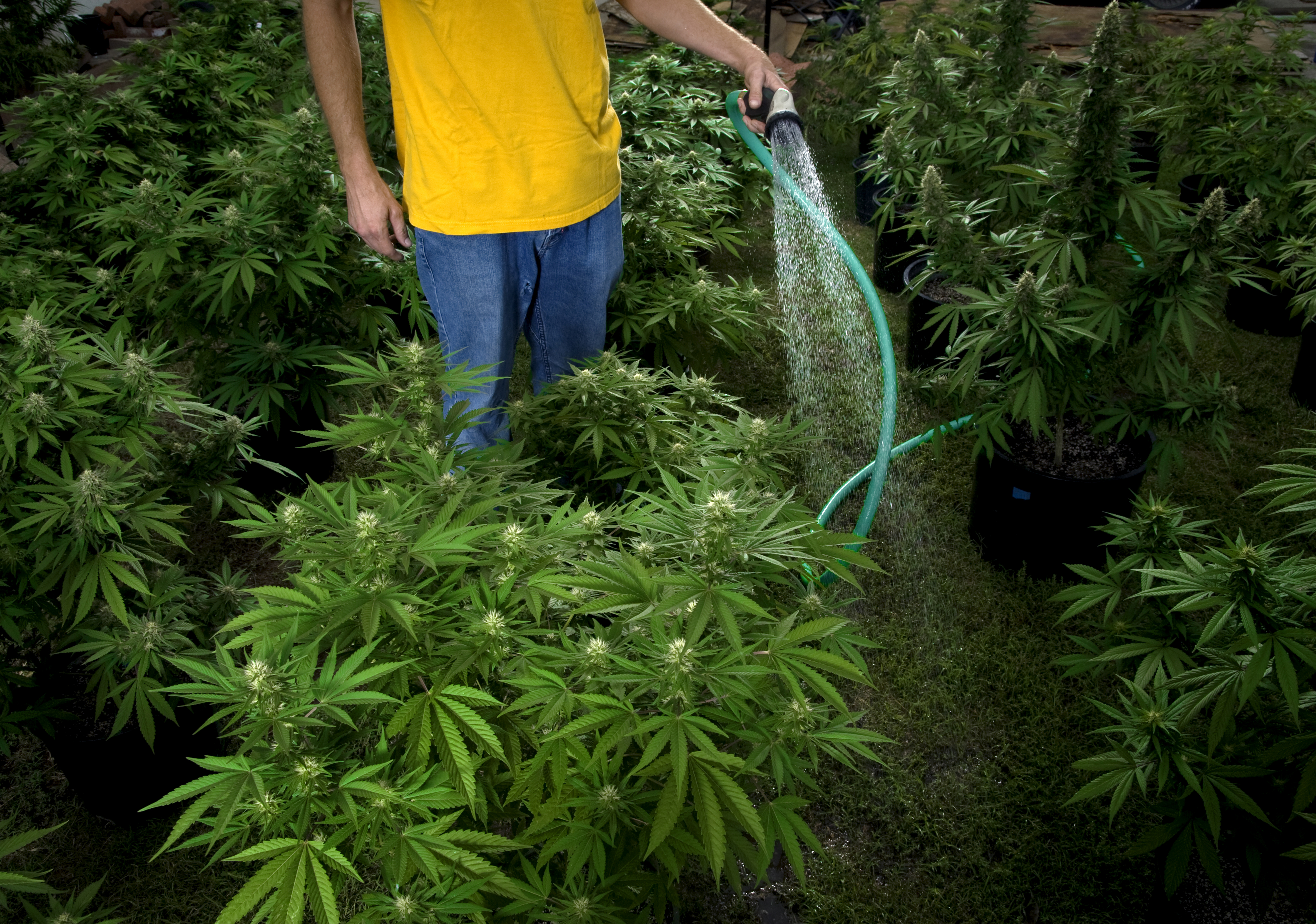 The Pot Law That Could Be 'Deal-Breaker for the Drug War'