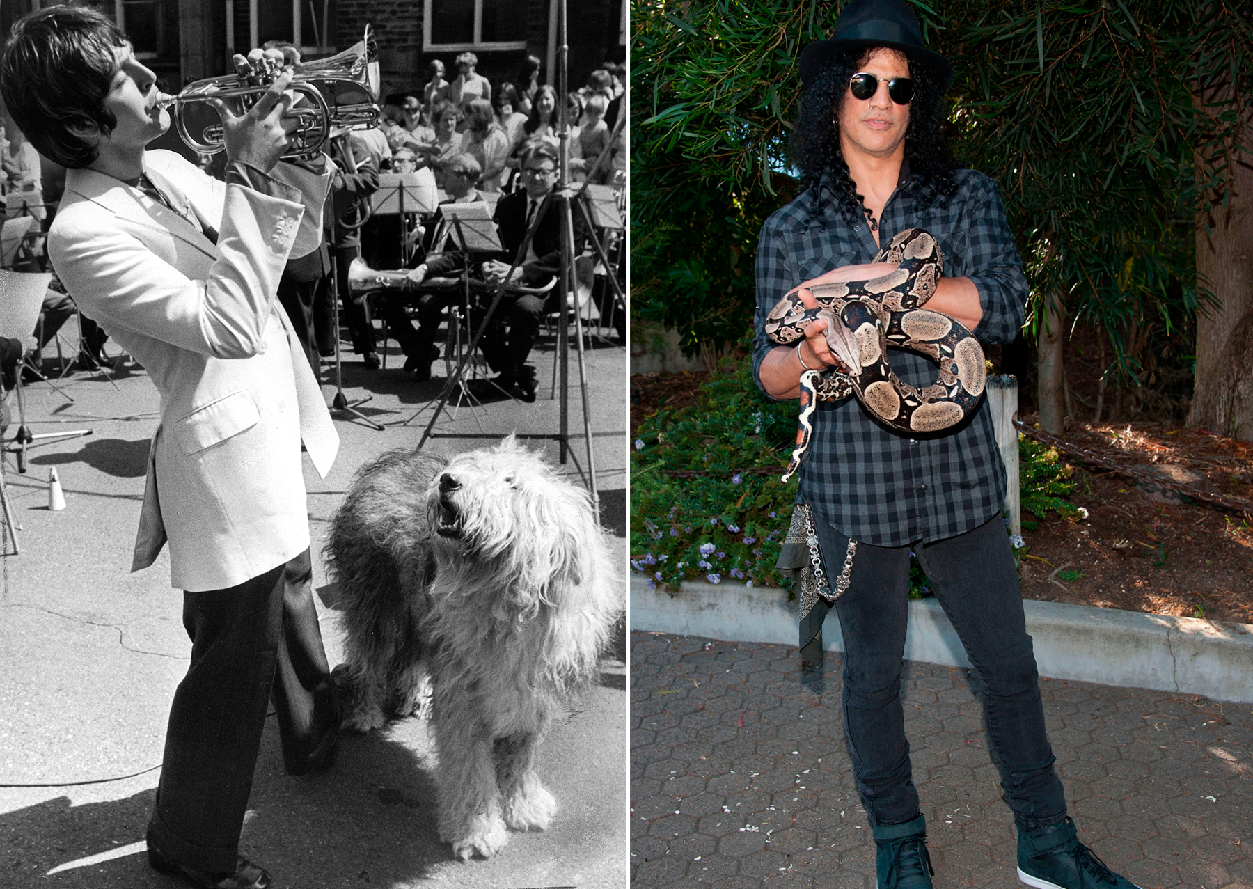 Wild Things 11 Pets That Influenced Rock And Pop Rolling Stone