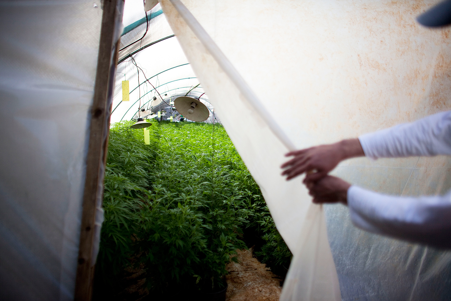 Why Are Feds Targeting High-End Pot Producers in California?