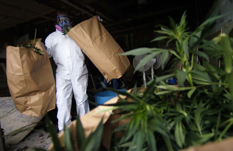 Study: Marijuana Arrests Outnumber Those for Violent Crimes