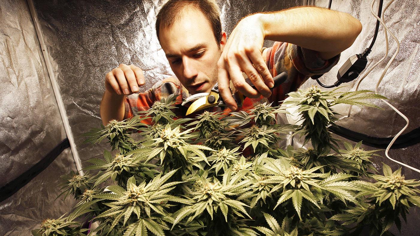 Про марихуану картинки семена марихуаны самые лучшие