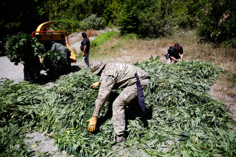 California Blocking Native Americans From Weed Business