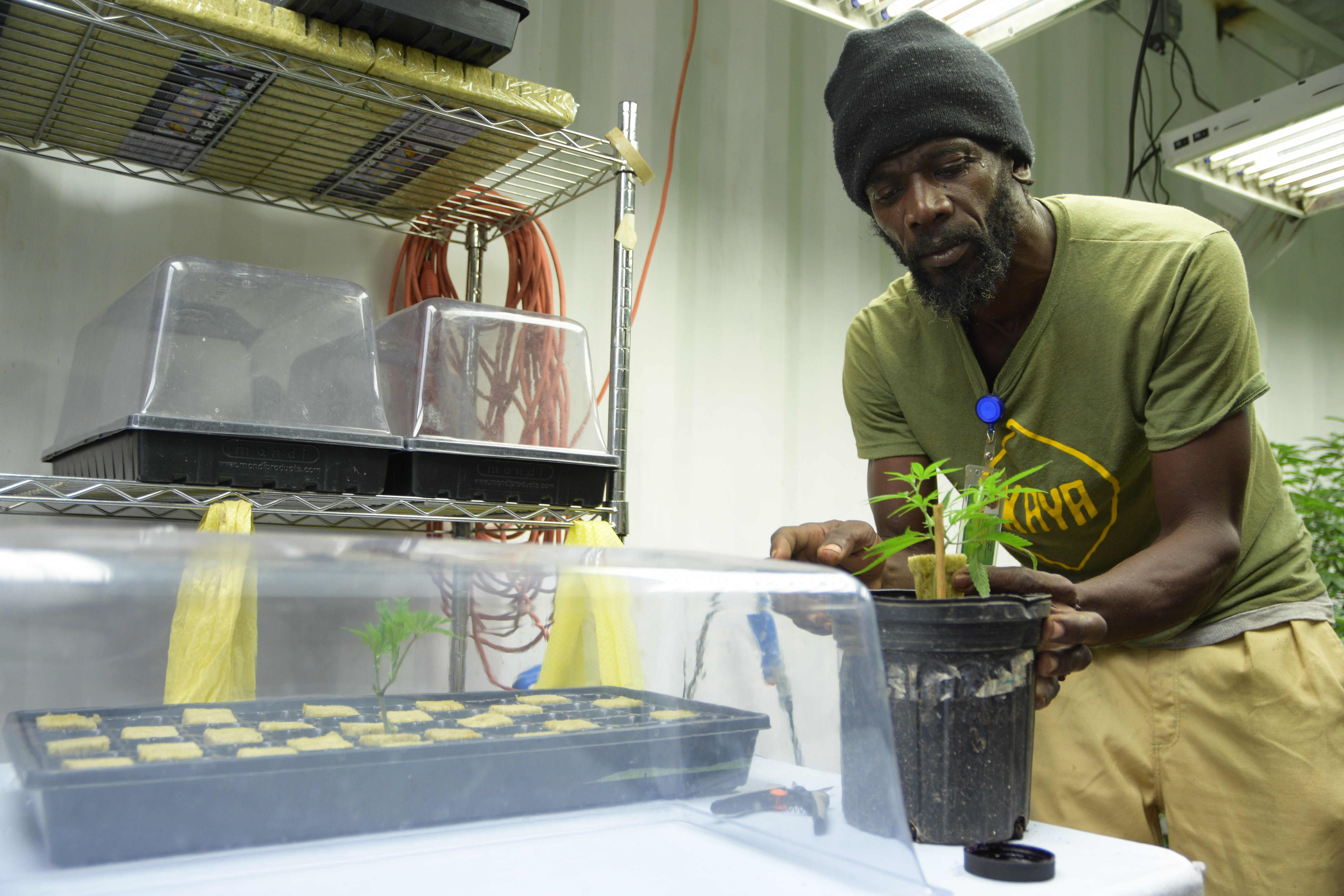 Now Decriminalized Could Jamaica Become Destination For Legal Weed Rolling Stone