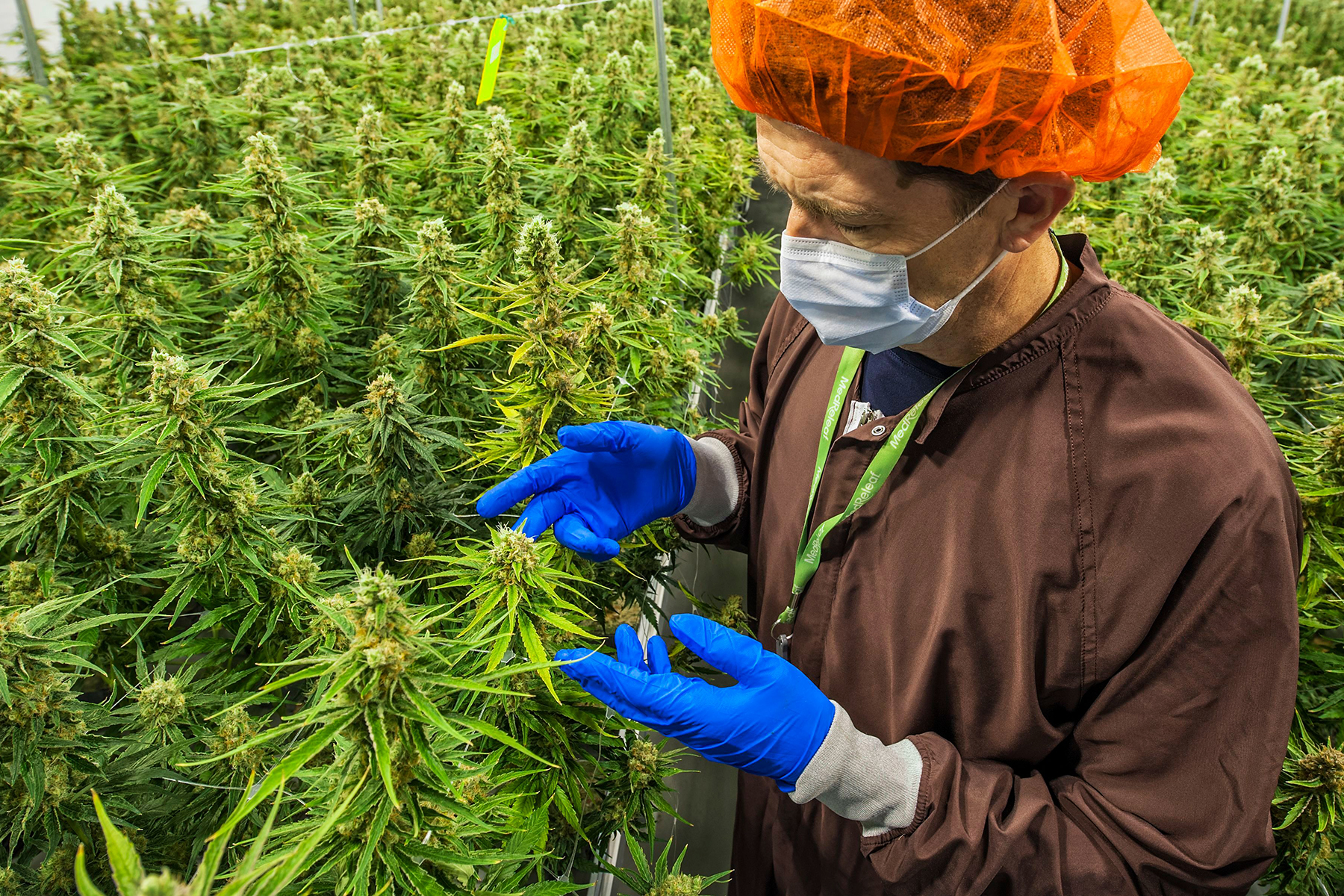 Trump Administration OKs Deal to Import Pot from Canada