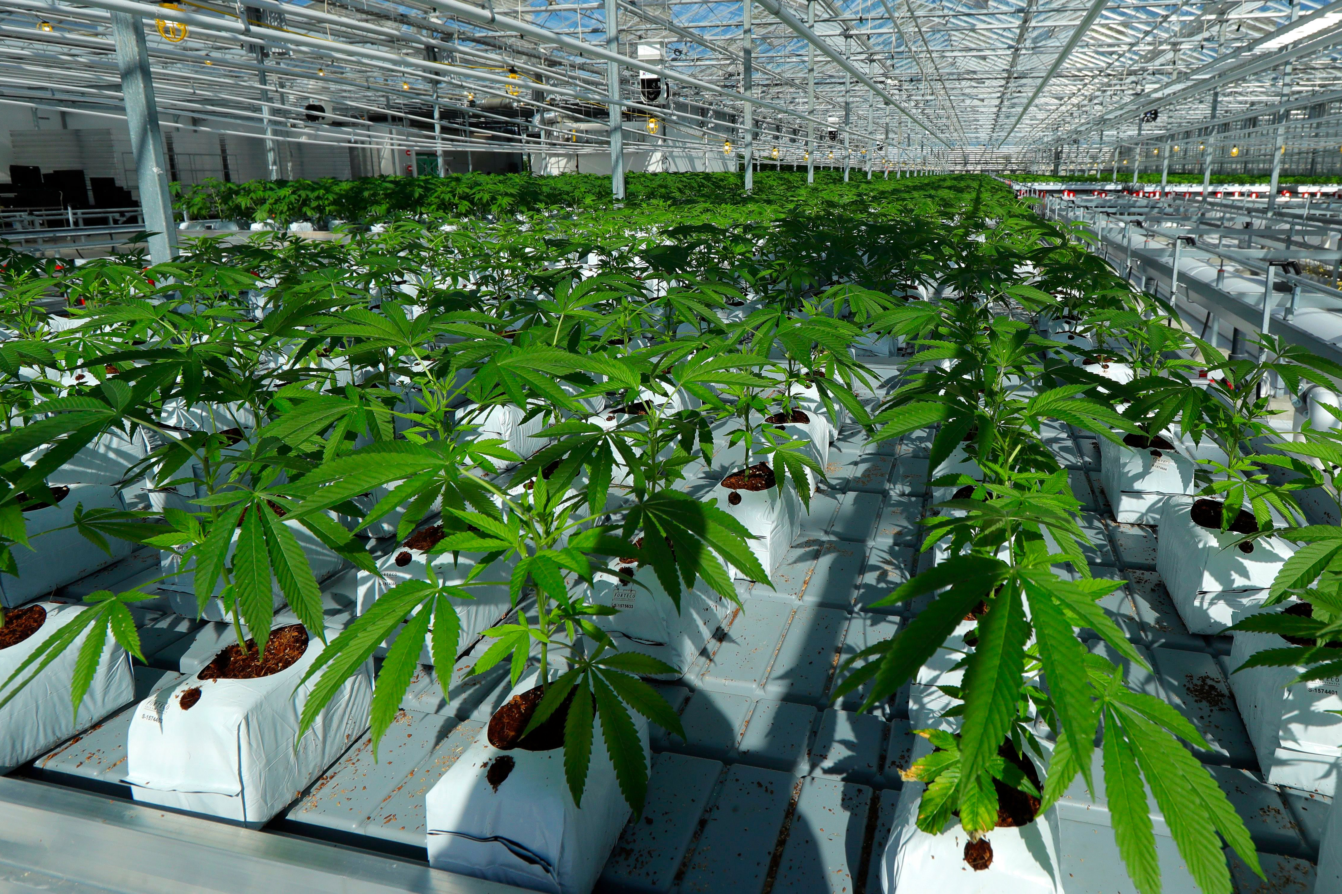 What U.S. Lawmakers Think of Canada?s Legal Weed