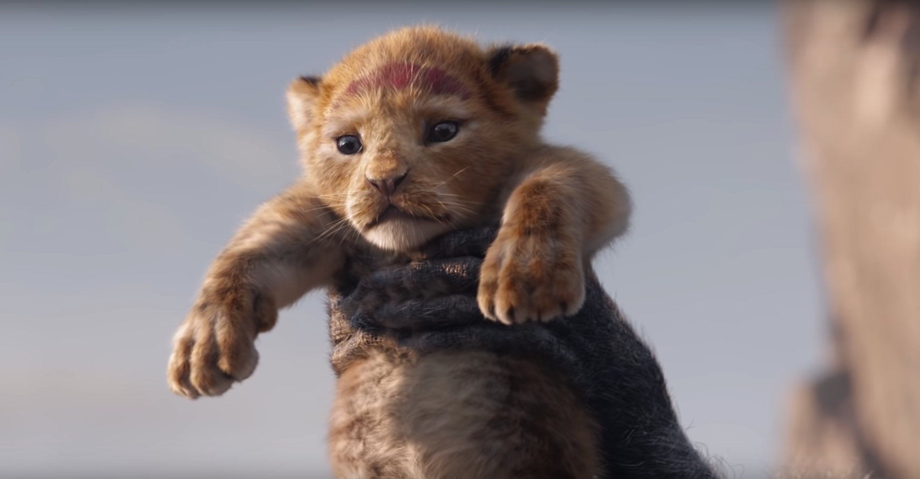 see simba u2019s introduction in first teaser for live