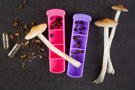 Psychedelic Mushrooms: Oregon Considering Legalizing