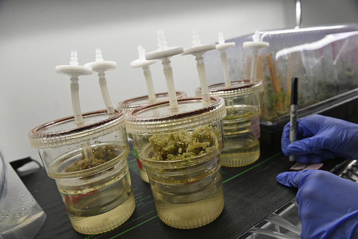Future Weed: Formulations, Patents and Where Cannabis Is Going Next