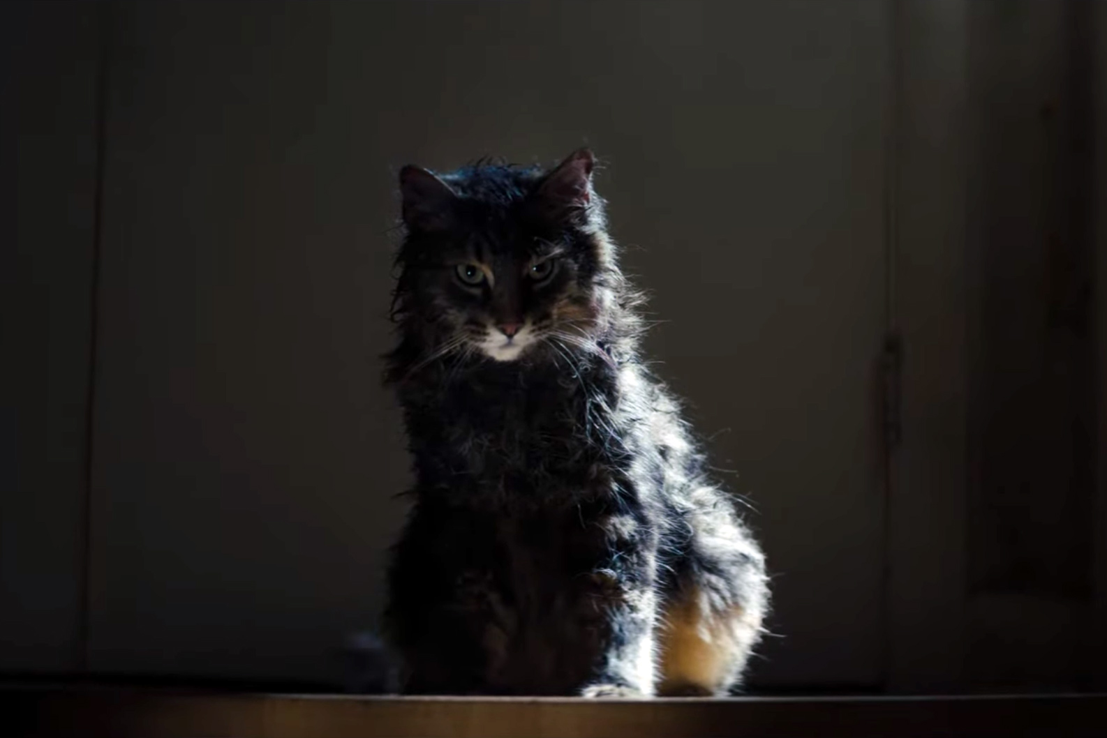 Watch Chilling New Trailer for Stephen King's 'Pet Sematary'