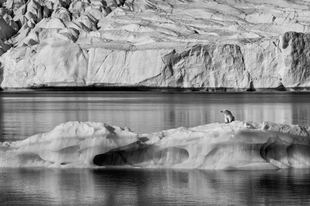"""A polar bear in Svalbard, Norway. """"Ice is like the soil in a garden,"""" says Nicklen. """"You can't have a garden without soil. That whole ecosystem will ultimately collapse without ice."""""""