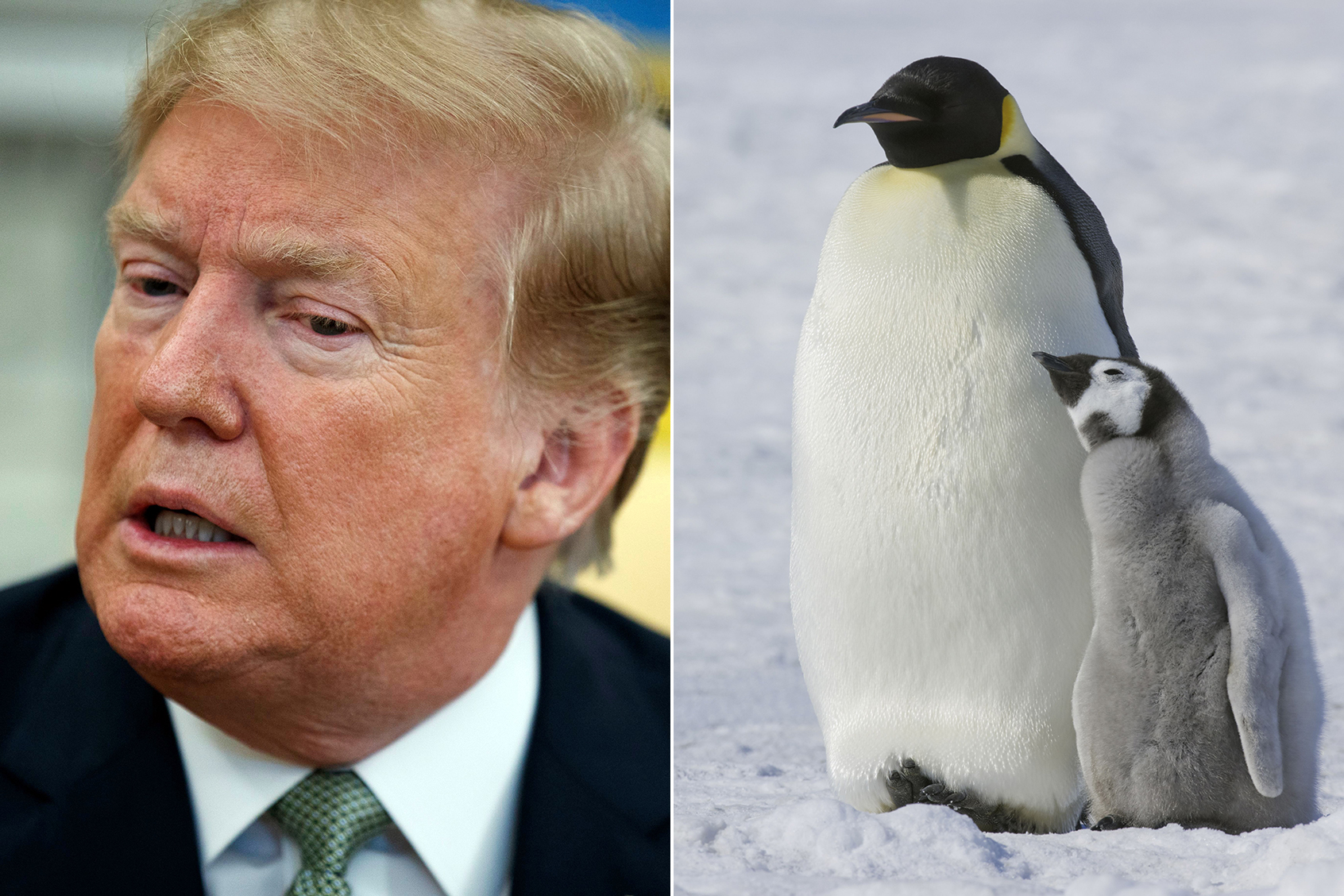 Journey to Antarctica: What Scientists Think of Trump's Latest Climate Tweet