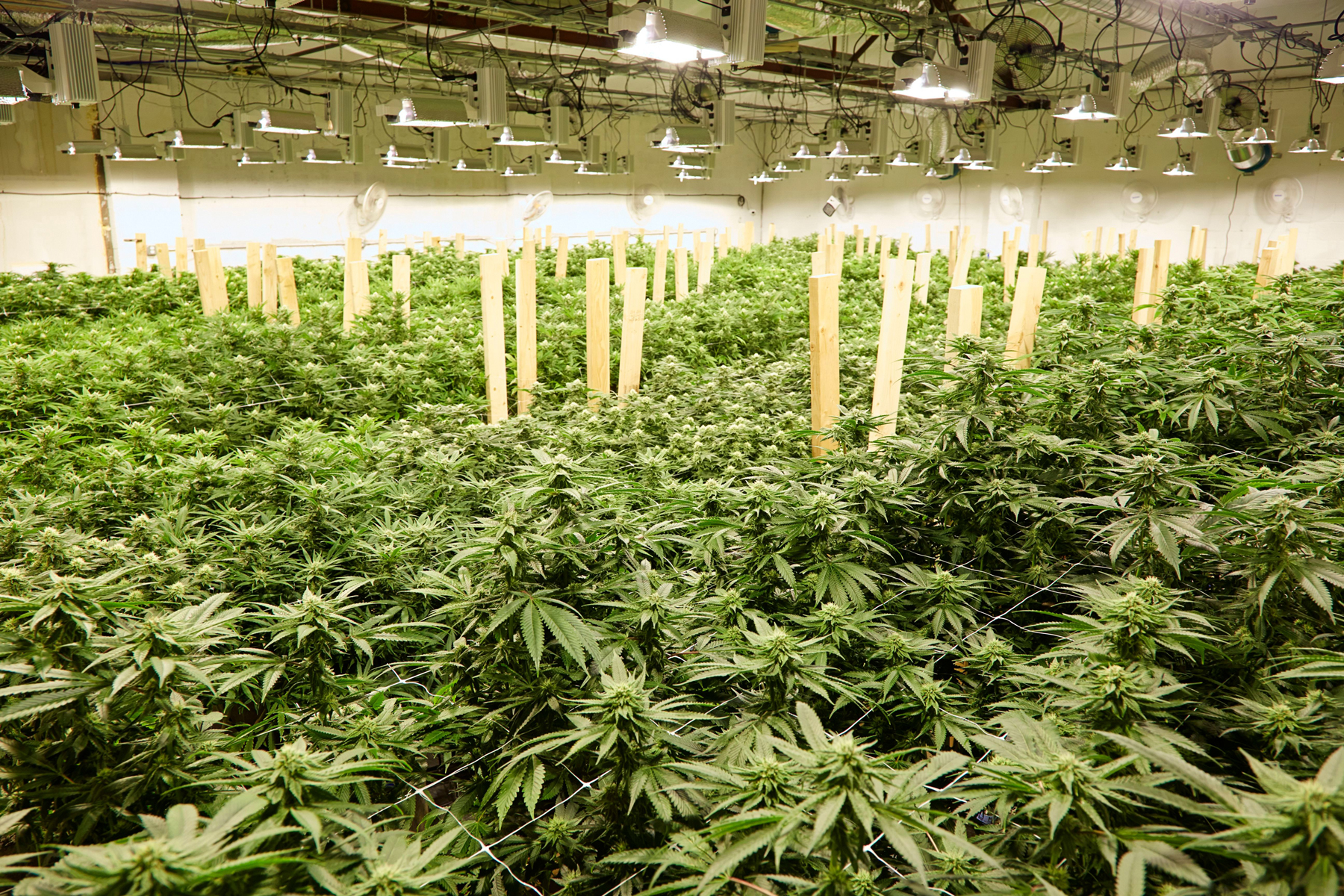 Canadian Weed Company Canopy Growth to Buy U.S. Firm Acreage After Legalization