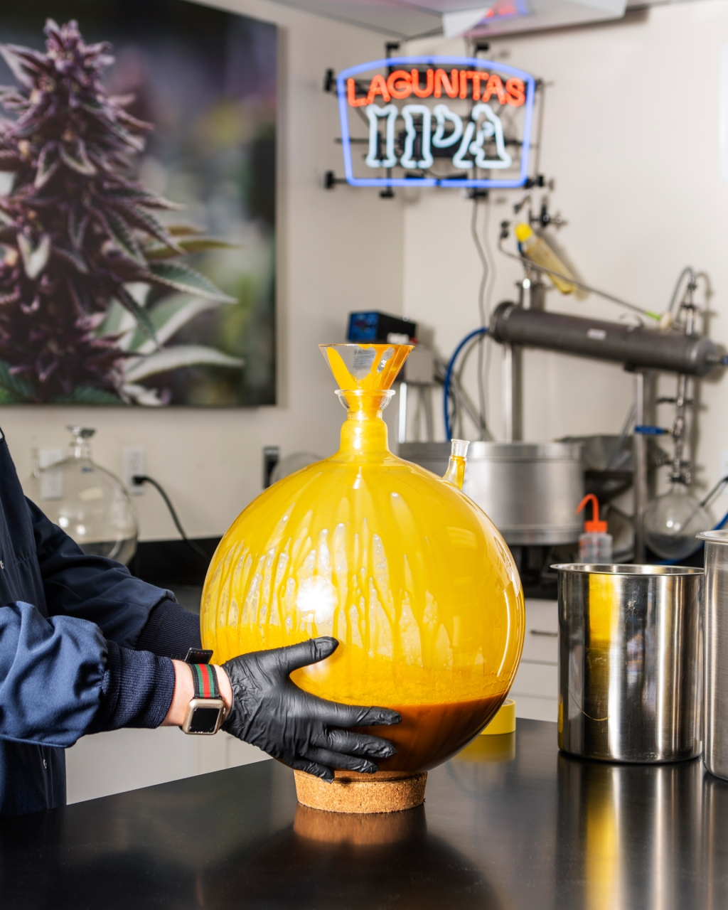 """This thick yellow goo is raw cannabis oil, which contains cannabinoids, terpenes and waxes. """"It has that soft-serve ice cream look to it"""" because of plant pigments and moisture, says Hunter."""