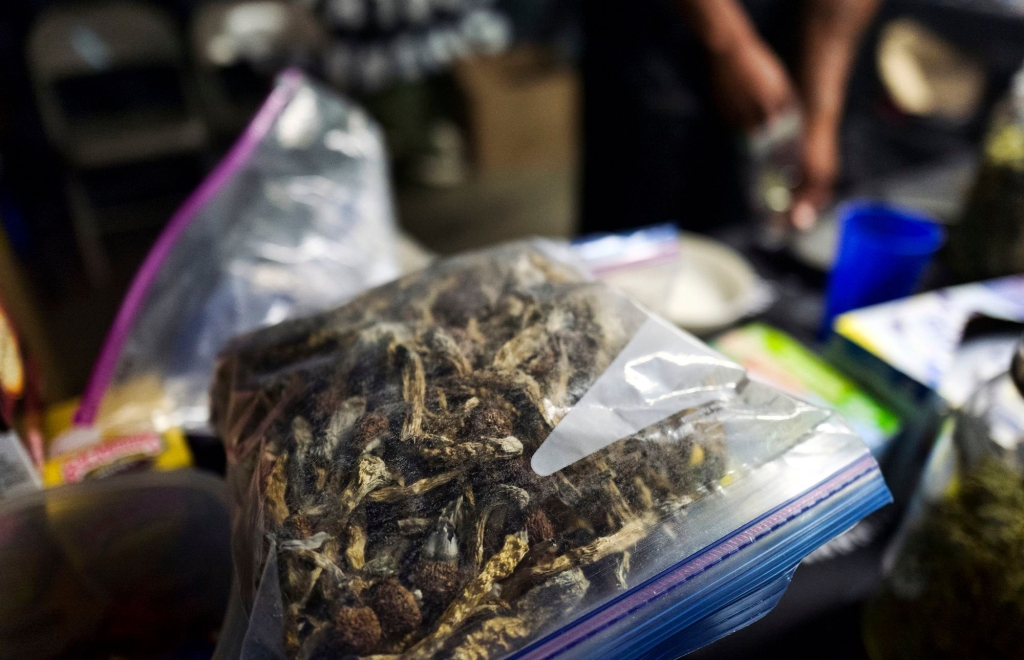 "A vendor bags psilocybin mushrooms at a pop-up cannabis market in Los Angeles on . Voters decide this week whether Denver will become the first U.S. city to decriminalize the use of psilocybin, the psychedelic substance in ""magic mushroomsMagic Mushrooms-Denver Vote, Los Angeles, USA - 06 May 2019"