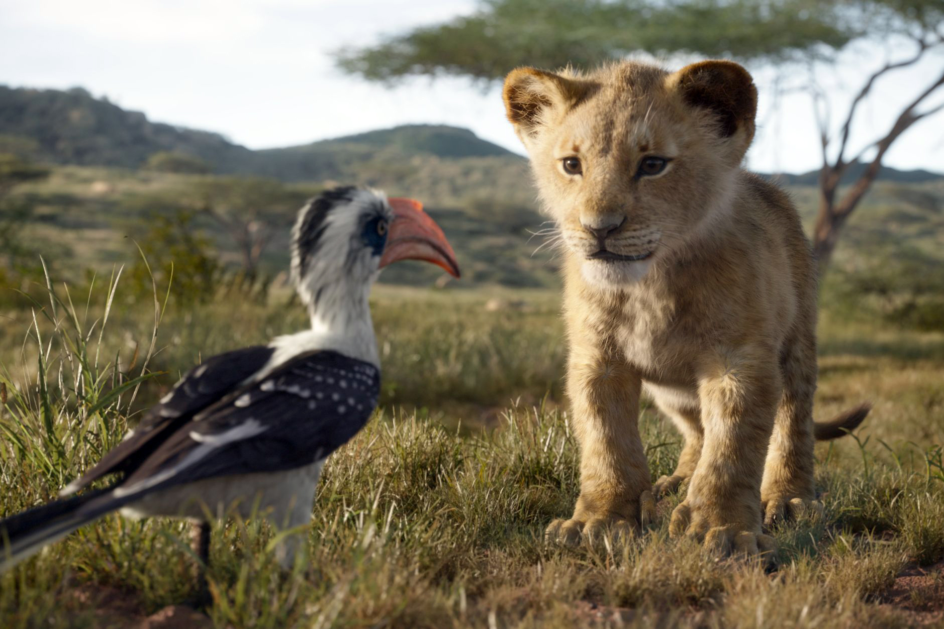 Best Merch for Fans of 'The Lion King' and Disney