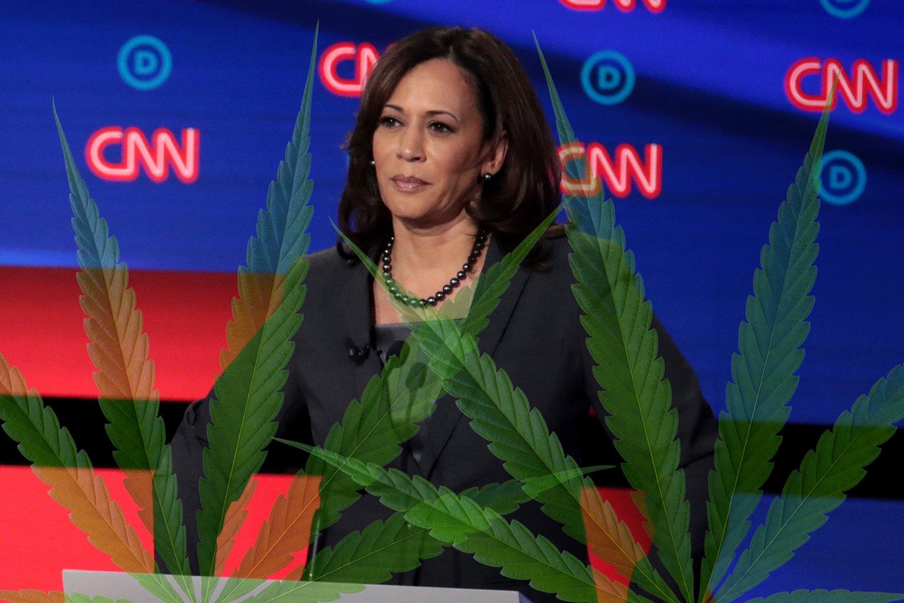 Kamala Harris Stance On Marijuana Guide To Marijuana Policy Rolling Stone