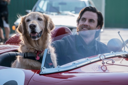 'The Art of Racing In the Rain' Review: A New Dog Gets Up to Some Old Tricks