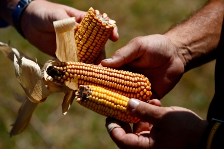 Climate Change Is Moving Us Toward a Food Catastrophe