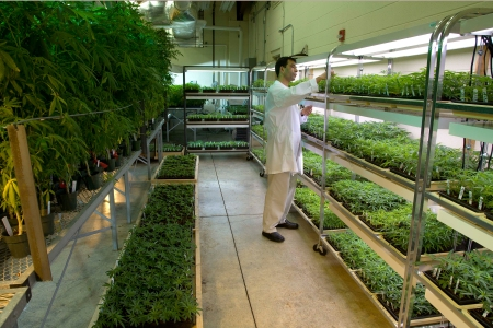 What's the DEA's Announcement Mean for the Future of Cannabis Research?