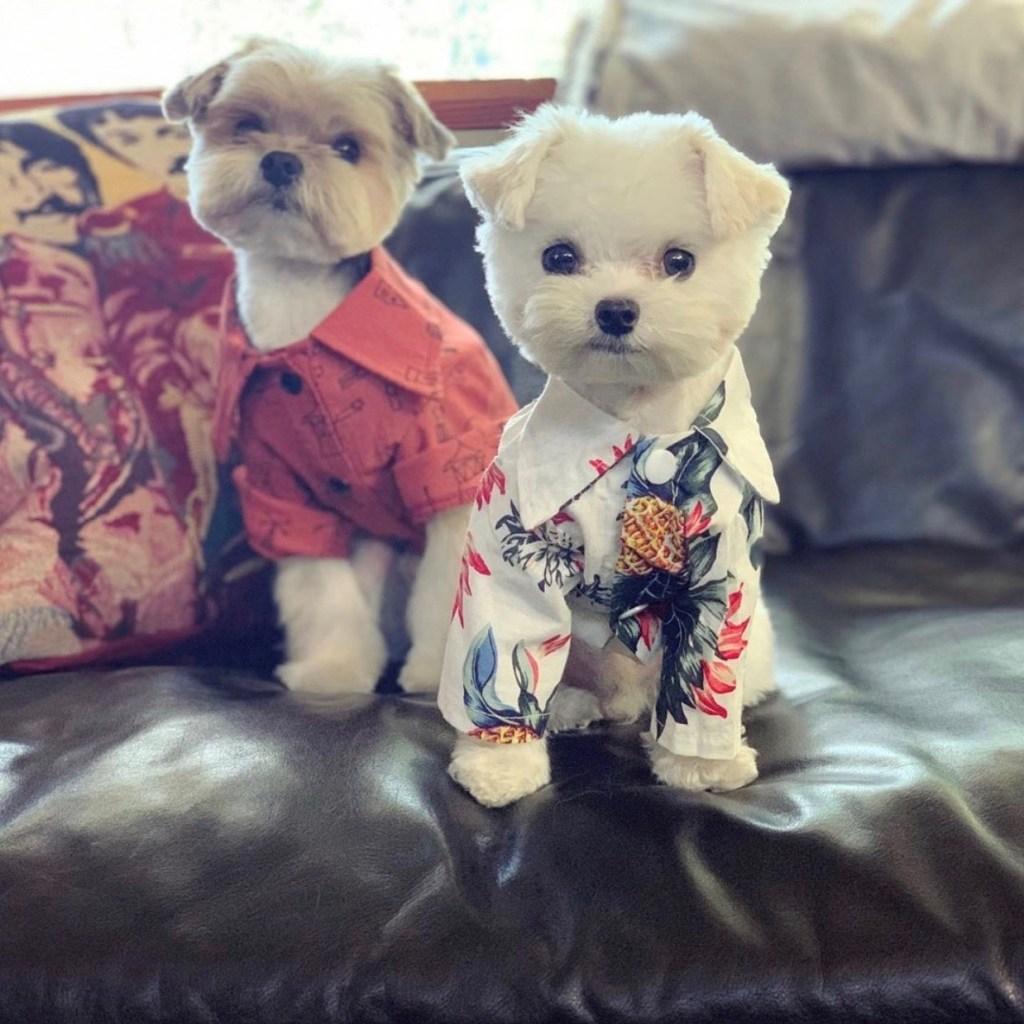 Sarah Barthel dogs phantogram