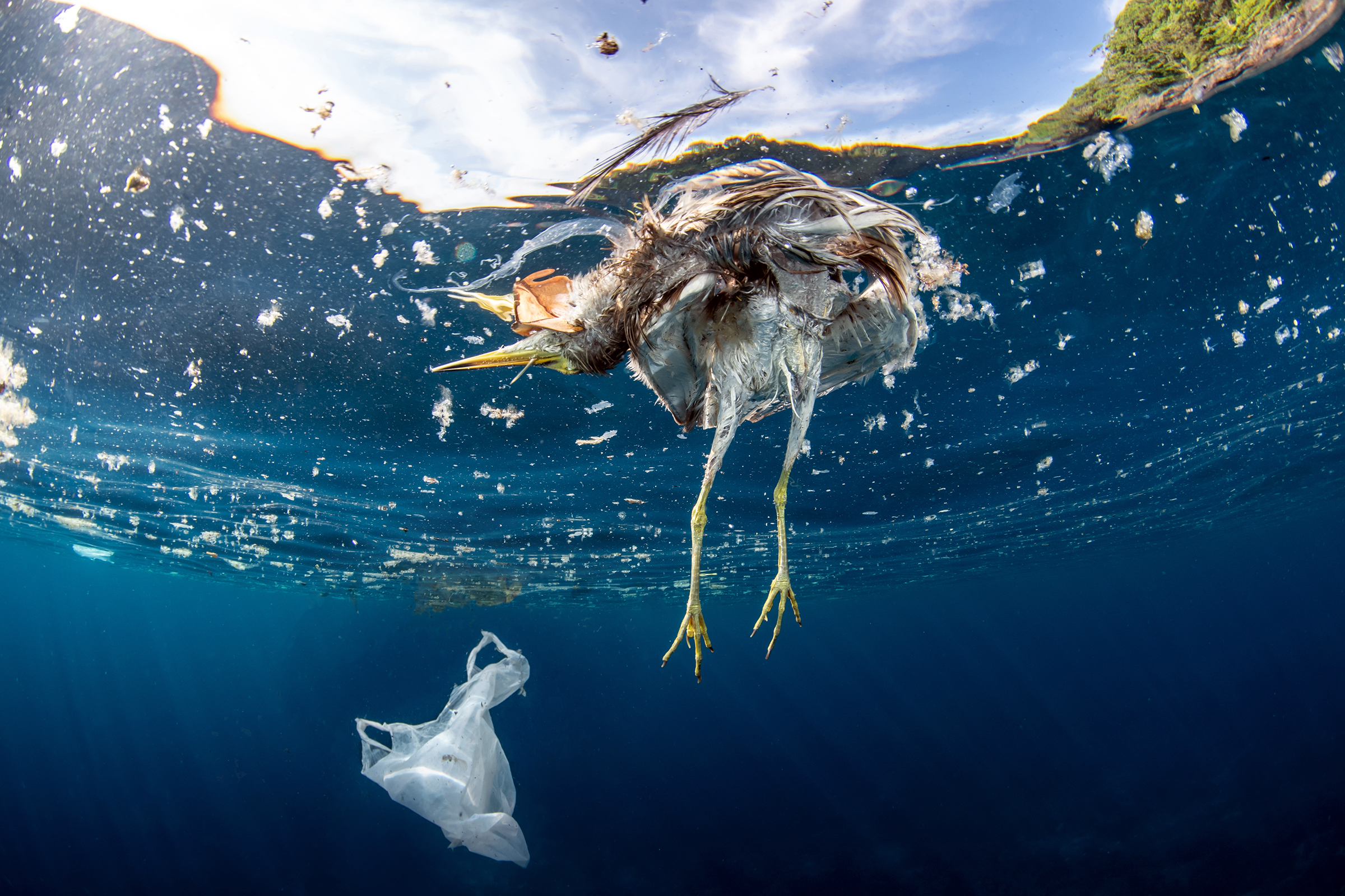 Dead bird and plastic bag floating in the ocean; Shutterstock ID 1261789855; Comments: rs.com