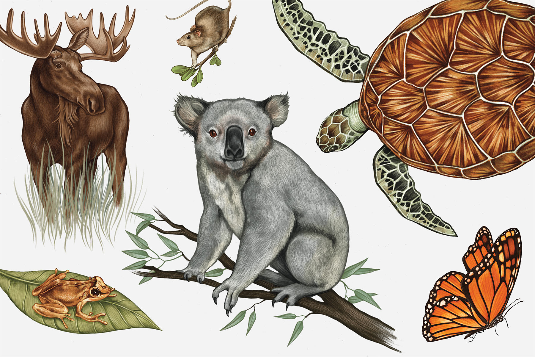 Animal Species on the Eve of Extinction - Rolling Stone