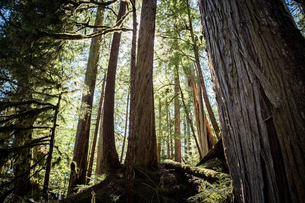 alaska tongass forest