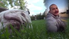 Adam Sandler's Bulldog Bagel Joins Fleetwood Mac 'Dreams' Craze