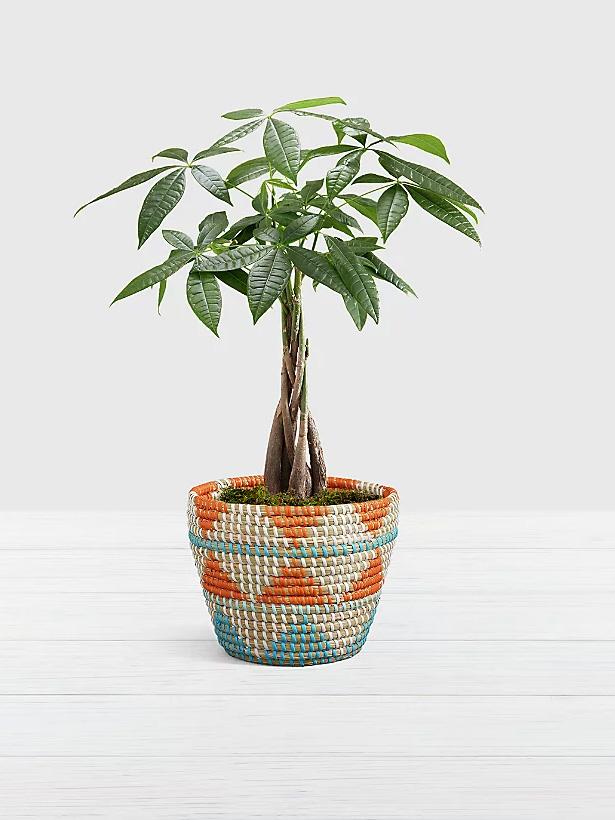 Best Online Plant Delivery Services - Pro Plants