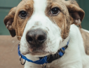 Rolling Stone Staff Help Hearts and Bones Find Forever Homes for Pets in Need