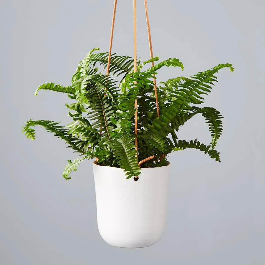 Best Online Plant Delivery Services