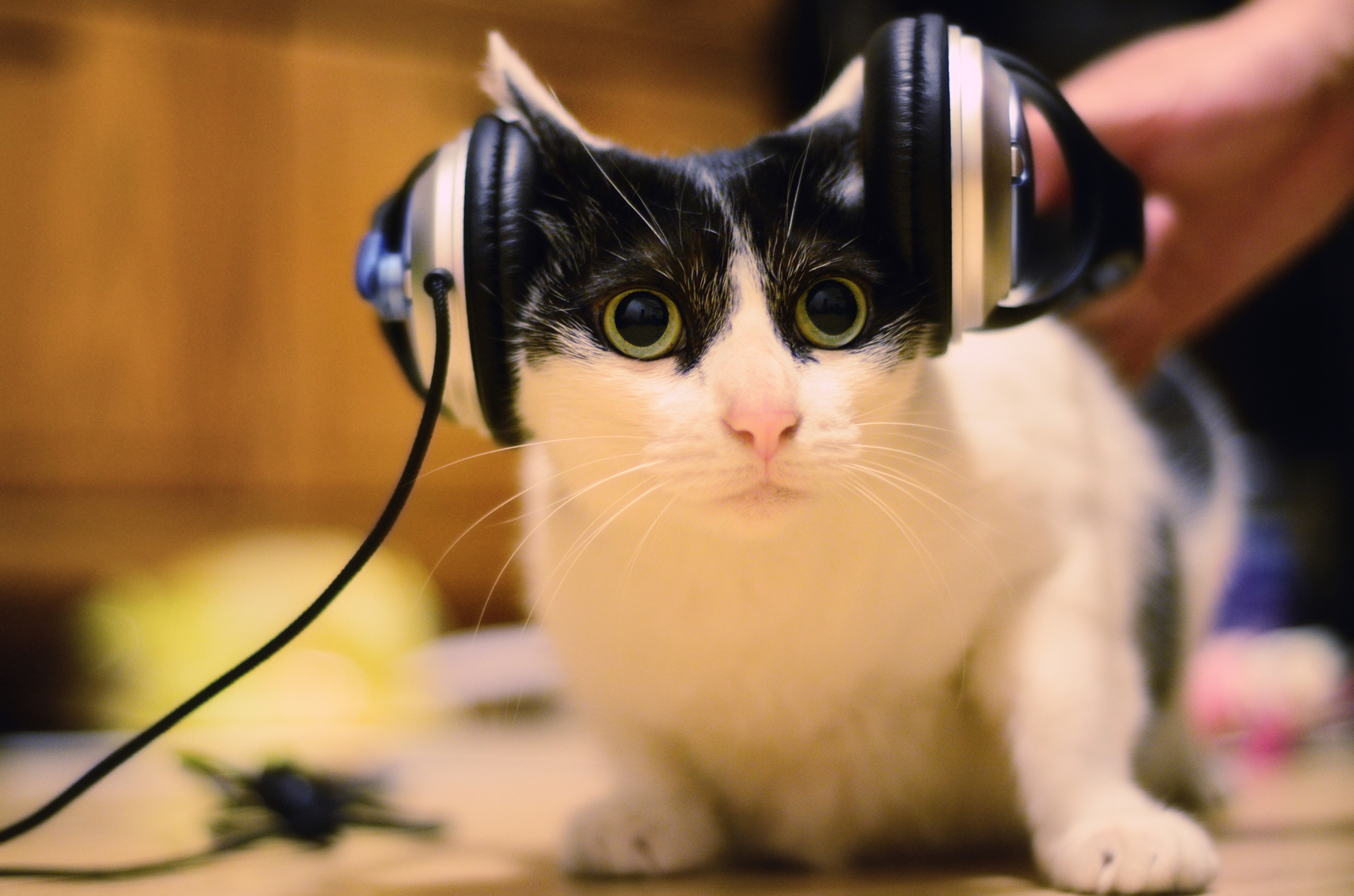 Why Are Cats on <b>TikTok</b> Getting Really Into Mid-2000s Ambient Music? thumbnail