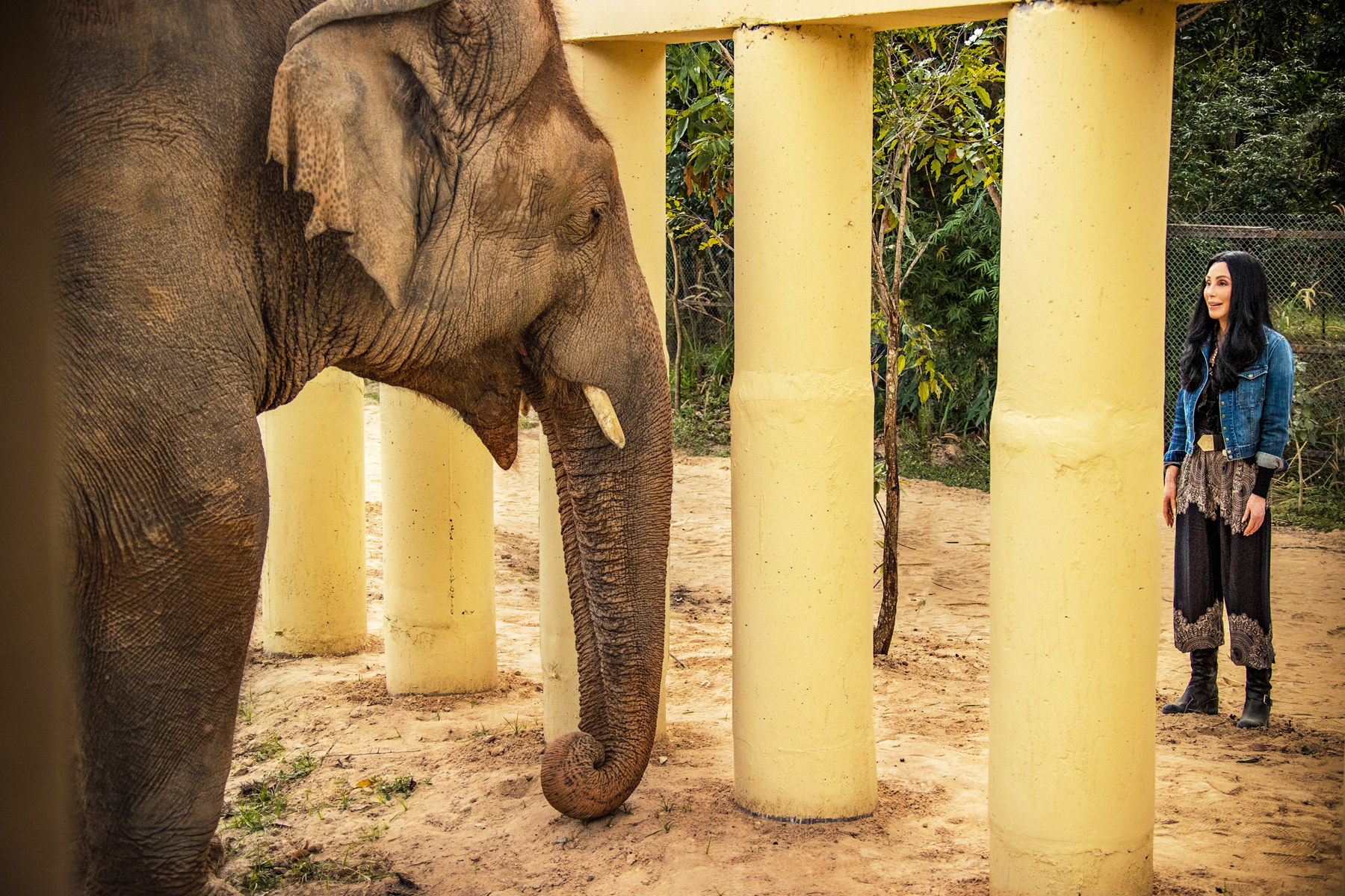 Cher Is Trying to Save the 'World's Loneliest Elephant' thumbnail