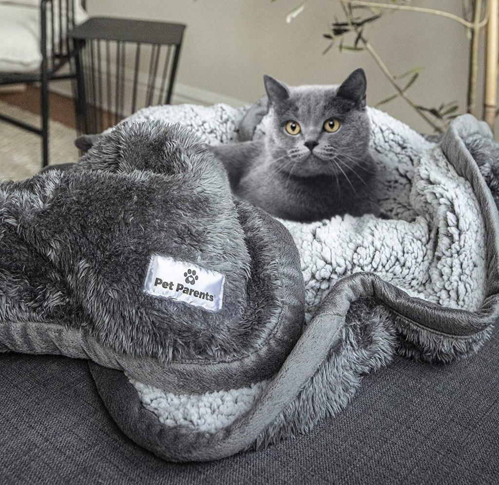 sherpa best pet blanket