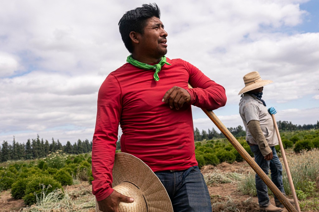 Pedro Lucas, nephew of farm worker Sebastian Francisco Perez who died last weekend while working in an extreme heat wave, talks about his uncle's death on Thursday, July 1, 2021, in St. Paul, Ore. (AP Photo/Nathan Howard)