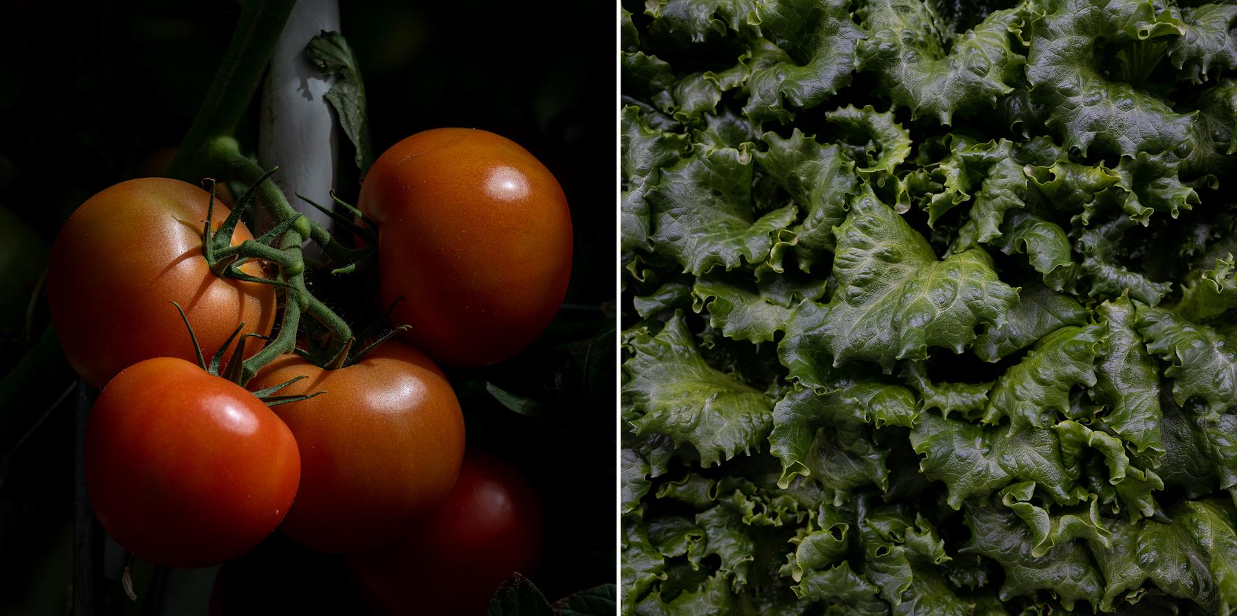 I pomodori sulle viti sono visibili nella serra occidentale di Appharvest e piante di lattuga nella fattoria di contenitori Appharvest presso la Rowan County Senior High School.